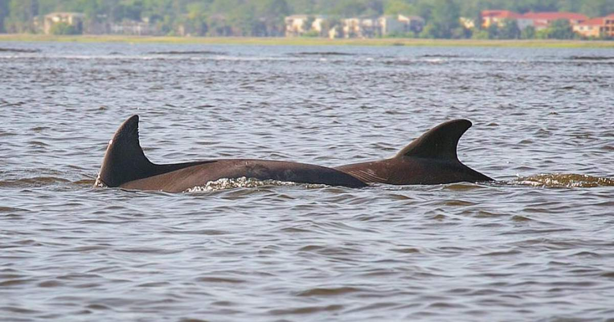 Nature Tour: Where to Spot Dolphins in JAX